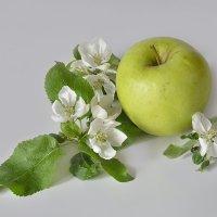 Этюд с яблоком. :: Master