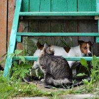 Не дразни, кот, пса — придёшь домой без уса! :: Наталья Natupans