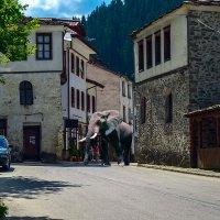 Известно, что Слоны в диковинку у нас :: Александр Липовецкий