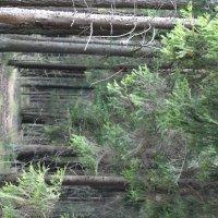 Forest :: Ирэн Хоружик