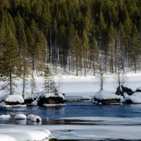Весенний лес :: Дмитрий Павлов