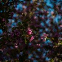 Весна. :: Наталья О.