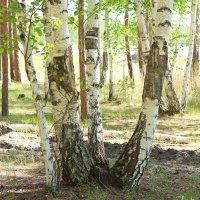 В лесу :: Елена Красильникова