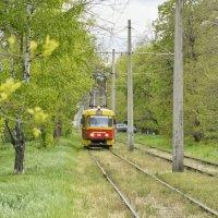 Лесной трамвайчик :: Андрей Майоров