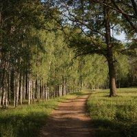 закат в лесу,, :: Олег Мейзингер