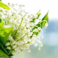 Дыхание весны :: Оксана Грищенко