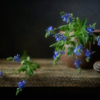 синие цветы... :: Natali-C C