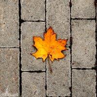 Осенний минимализм :: Дмитрий Павлов