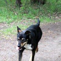 собака гуляющая сама по себе :: ольга хакимова
