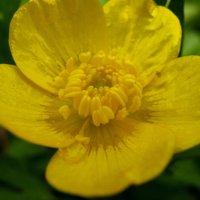 Цвет настроения-жёлтый! :: Дмитрий Арсеньев