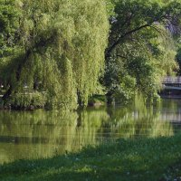 Летнее утро в парке. :: barsuk lesnoi