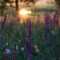 Природа и закат :: Виктория Кустова