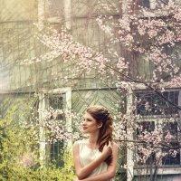 Девушка в вишневом саду :: Елена Соловьева