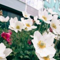 Аллея цветов :: Елена Горбатова