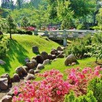 Цветение рододендронов в Японском саду :: Aida10
