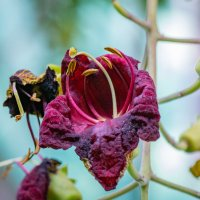 Цветут деревья 5 :: Oleg