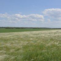 Ковыльные поля , степей Донских. :: Виктор