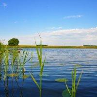река Рпень :: Лето Теплое