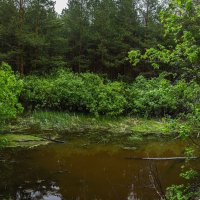 В заповедном городском лесу :: Дмитрий Костоусов