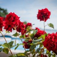 Розы :: Pavel Bamboleo