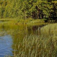 Июнь. На озере. :: Михаил Попов