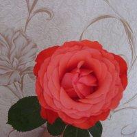 Роза. :: Нина Акарцева