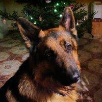 Мой любимый пёсик Граф :: Маргарита