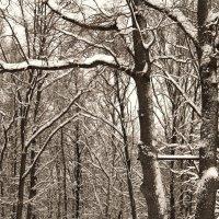 Турник в лесу..) :: Елена Минина