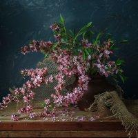 танцуют из цветов метели... :: шмакова тамара