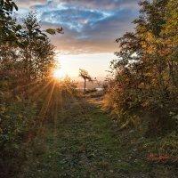 Утренние лучи :: Vladimbormotov