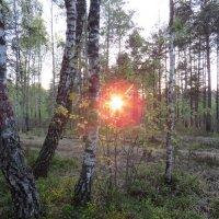 закатное солнце :: Галина