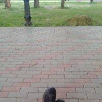 Отдых после прогулки :: ЕР