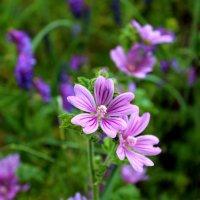 Полевые цветочки. :: Антонина Гугаева