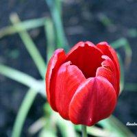 цветы во дворе :: Валентина Ильиных