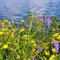 Берег озера :: Tatjana