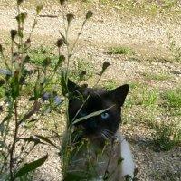 Голубые глазки :: demyanikita