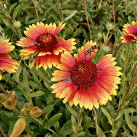 Полевые цветы :: Владимир Бровко