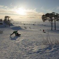 В Северодвинске погибли две сосны - символ ягринского бора :: Владимир Шибинский
