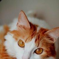 Кошка Нюша :: Татьяна Ковалькова