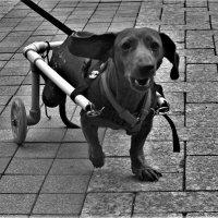 Агрессивный пёс :: Сергей