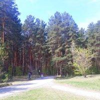 В лесопарке лыжероллейная трасса :: Олег Афанасьевич Сергеев
