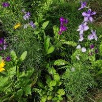 полевые цветы :: жанна
