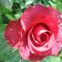После дождя :: Татьяна