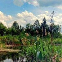 долгое озеро :: Александр Прокудин