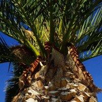 Пальма, небо... осень на Крите :: Константин Беляков