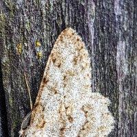 Бабочки бывают разные... :: Tatjana