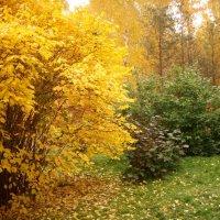 Осень. :: Ольга