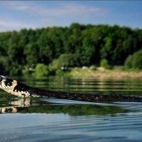 Федор Конюхов :: Михаил Дрейке