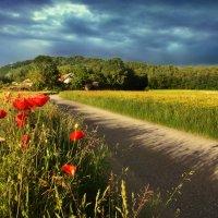 прекрасен лес и поле, и цветы... :: Elena Wymann