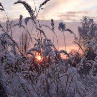 Зимняя природа :: Данила Колосов